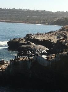 La Jolla Cove plus assorted wildlife